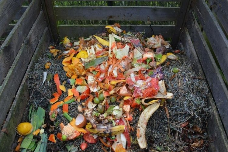 Basic Needs of Compost